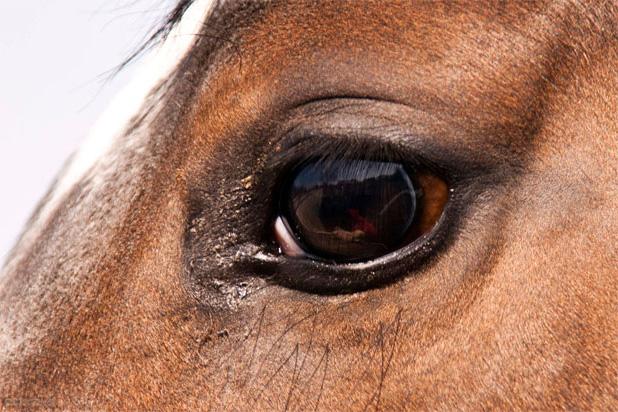 En nuestra tienda hipica online encontrarás todo lo necesario para tus caballos y de mejor calidad