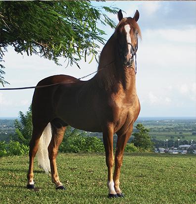 Lo mejor para tu caballo en nuestra tienda hipica y de ecuestre online